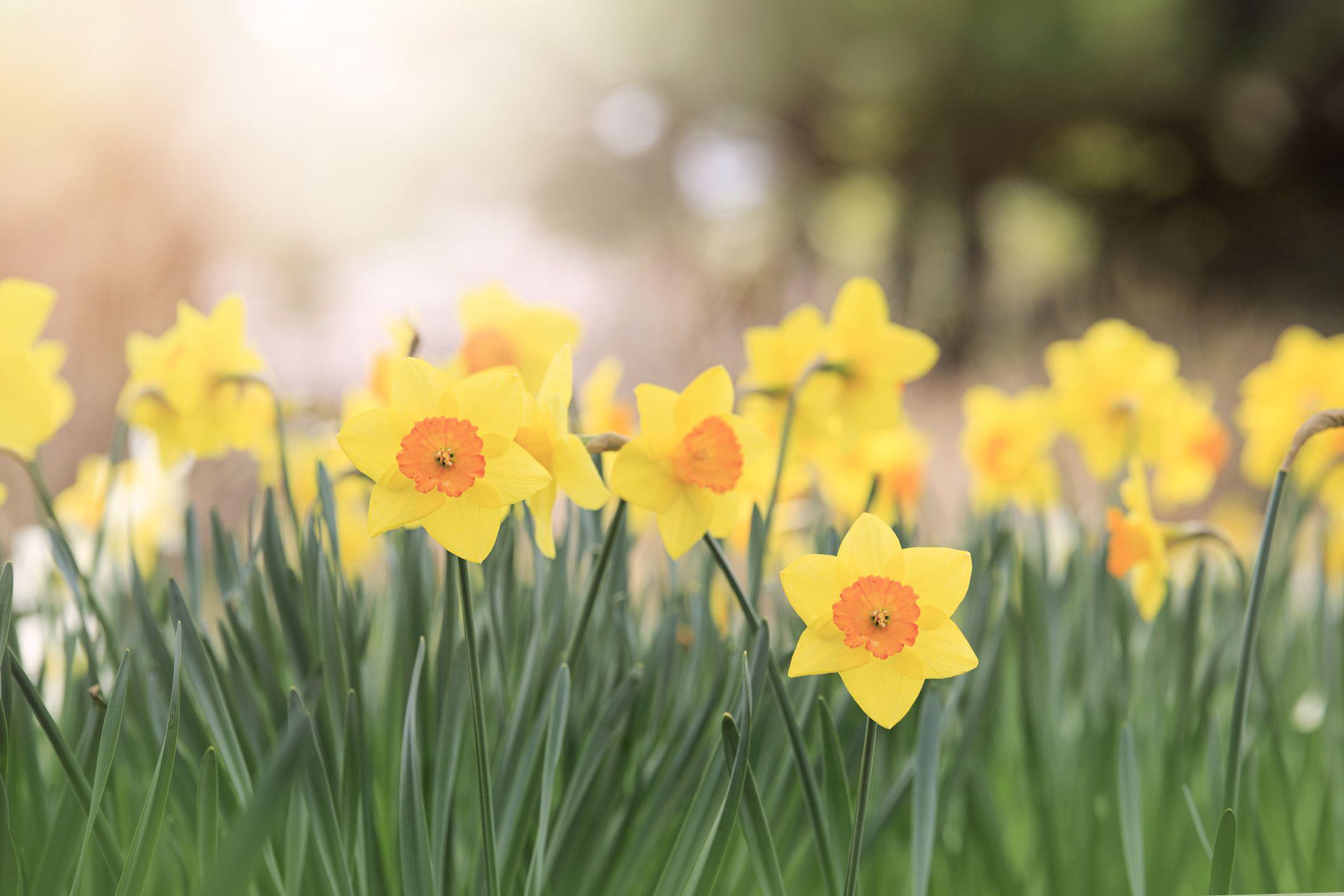 8 Lovely Springtime Blooms To Enjoy The Season